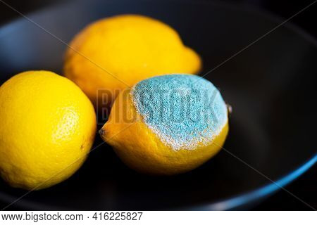 Three Tipes Of Whole Yellow Lemon: With Light Turquoise Textured Mold, Normal Ripe Bright Edible  Le
