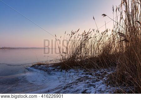 Reeds On Shore Of The Lake Salzhaff In Rerik, Germany.