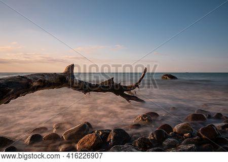 Trunk On The Baltic Sea Coast In Nienhagen, Germany.