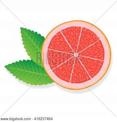 Grapefruit Slice Illustration For Web Isolated On White Background