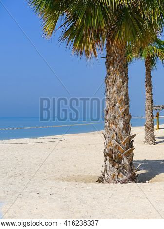 Scenic View To Beautiful Palm Tree At Empty Sandy Beach Of Persian Gulf, Middle East,uae. Vacations,