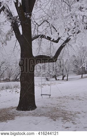 A Tree Covered With Hoar Frost On A Very Foggy Day Has A Swing Hanging From A Branch.