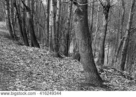 Abstract Parts Of Tree Trunks Closeup In The Forest Or In The Park In Black And White Photos
