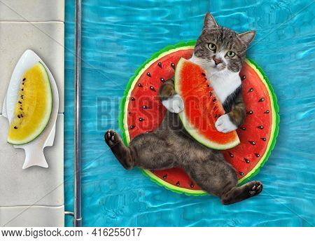 A Colored Cat With A Slice Of Watermelon Is Lying On A Watermelon Ring In A Swimming Pool At The Res