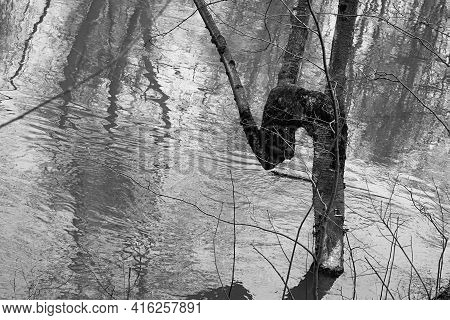 One Abstract Curve And Bent Tree Trunk Of Closeup On The Blurred Background Of The River
