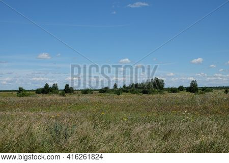 Various Steppe Herbs Under The Blue Sky. Several Trees In The Steppe. Scenery.