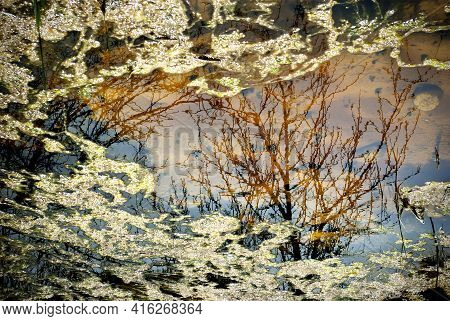 A Tree Reflected On Water Surface. A Puddle With Reflections On Water Surface.