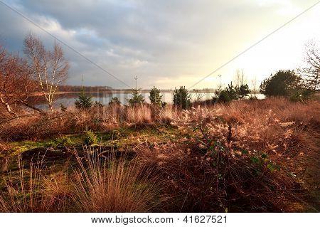 Swamps In Dwingelderveld Before Sunset