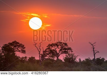 African Sunset Above Silhouetted Savanna Trees Bushes And Grass At Sunset In Kruger National Park So