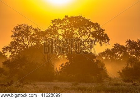 Orange Morning Light Through Savanna Tree And Bush On Famous S100 Road In Kruger National Park South
