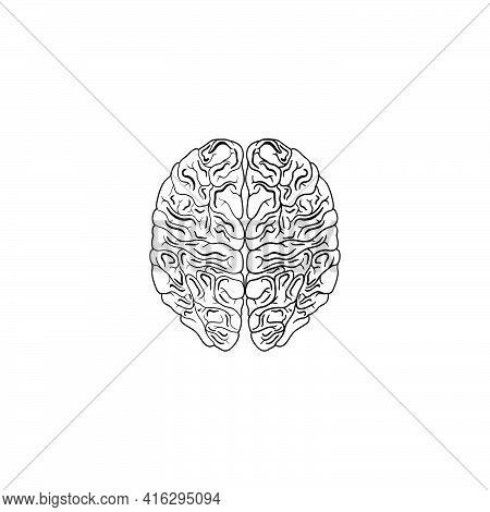 Modern Minimalistic Human Brain Line Icon Vector. Simple Brain Of Human Outline Icon. Top View Brain