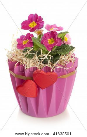 Pink Beautiful Flowers In A Decorative Pot