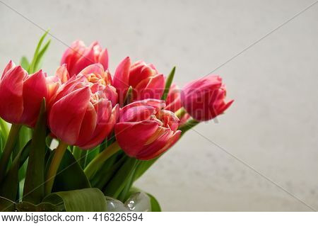 Gentle Bouquet Of Fragile Pink Tulips In The Vase Ready For The Celebration. Floral And Herbal Backg