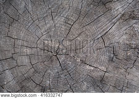 Close Up View Onto Stump Of Pine Tree, Its Surface With Heartwood, Growth Rings, Wood Texture. Old C