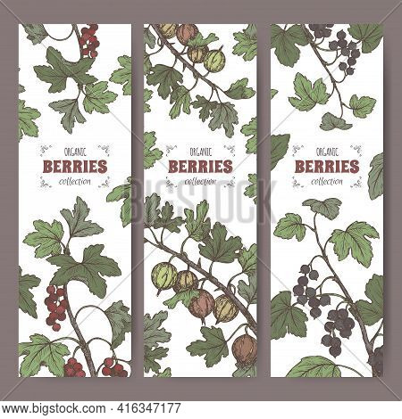 Set Of Three Labels With Black Currant, Red Currant And Gooseberry Color Sketch. Berry Fruits Series