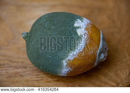 Closeup Of Green Moldy Lemon Fruit On Wooden Background. Perishable Food. Rotting Citrus Decompositi