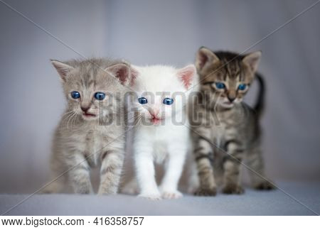 Group Of Small Kittens