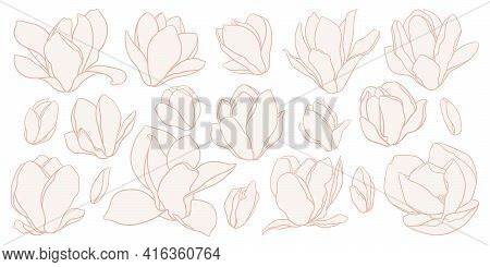 Set Of Magnolia Flowers, Line Drawing With Fill On White Background. Floral Vector Sketch In Beige C