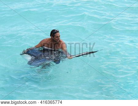 GRAND CAYMAN, CAYMAN ISLANDS - DEC 23, 2012: Unidentified tour guide holds a Manta Ray in the shallows off the coast of the Grand Caymans.