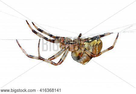 Spider On Spider-web 36