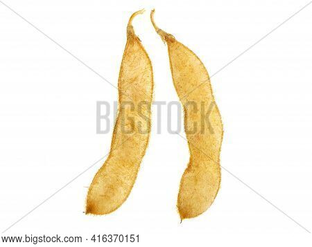 Soybean Pods Isolated On White, Glycine Max