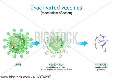 Inactivated Vaccines. Vaccine Use Killed Or Modified Viruses That Unable To Replicate. Mechanism Of