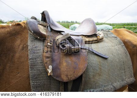 Closeup Of An Old Horse Saddle With Detail. Harnessed Horse Being Lead - Close Up Details. A Stallio