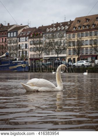 White Swan Swimming Infront Of Charming Picturesque Old Traditional Architecture Half-timbered House