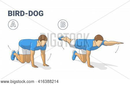 Man Doing Bird Dog Exercise To Train His Core Guidance. Male Workout Position For Abs Illustration.