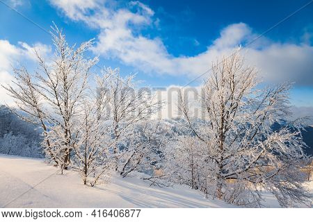 Small Fragile Tree Covered With Hoarfrost Lonely Grows From A Snowdrift Against The Backdrop Of Gian