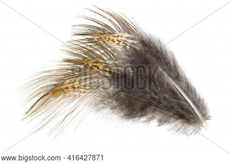 Brown Pheasant Feather On A White Background
