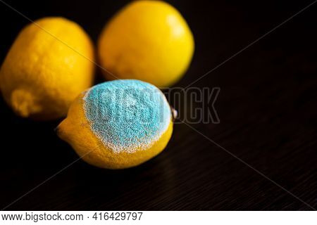 One Lemon With Light Turquoise Textured Mold, Another Two Lemons Are Normal, Ripe. Three Whole Yello