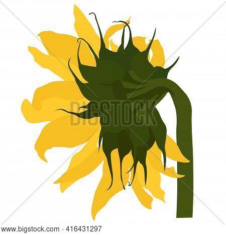 Sunflower Vector Stock Illustration. Yellow Sunflower Flower. Summer Solar Botany. Label For Sunflow