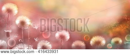 Flower Panorama. Blurred Natural Background. Delicate Natural Background In Pastel Colors. Fluffy Fl
