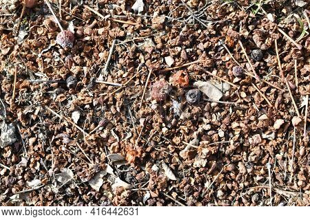 Soil With The Remains Of Bird Feces And Dried Berries In The Spring