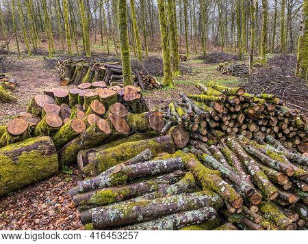 forest management, Forestry work, in a broadleaf forest, Stack of cut tree logs in a Virton forest, Luxembourg, Belgium
