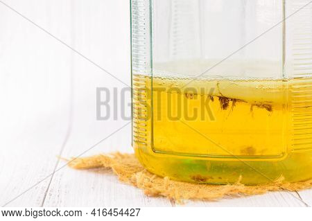 Kombucha Tea With Scoby In The Glass Jar, Healthy Fermented Food, Probiotic Nutrition Drink For Good