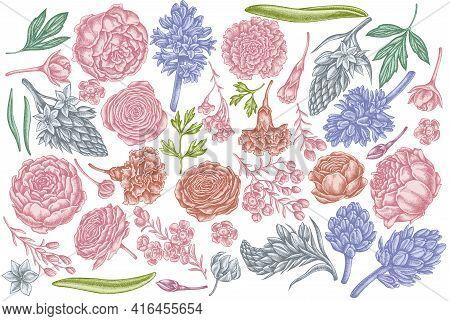 Vector Set Of Hand Drawn Pastel Peony, Carnation, Ranunculus, Wax Flower, Ornithogalum, Hyacinth Sto