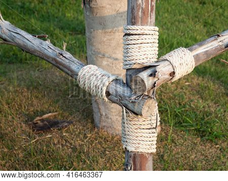 Tying A Rope To Hold The Tree Trunk To Prevent Wind Or Storm. Close Up And Selective Focus.