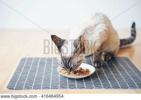 Cat Eating Canned Cat Food From White Ceramic Plate Placed Place Mat  On The Floor. Devon Rex Enjoys