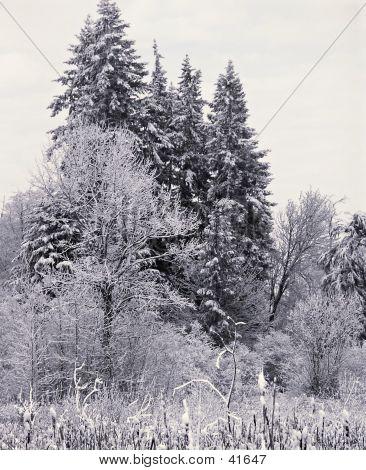 Winter Treesome