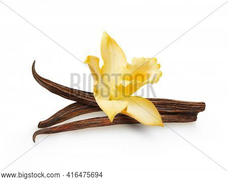 Dried vanilla sticks and vanilla flower isolated on white background. Aromatic ingredient for baking.