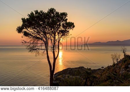 Sunset View Of Lonely Tree On The Cliff At Tyrrhenian Sea