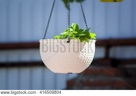 Hanging Pot Hanging On A Tree With A Green Plant On A Sunny Day