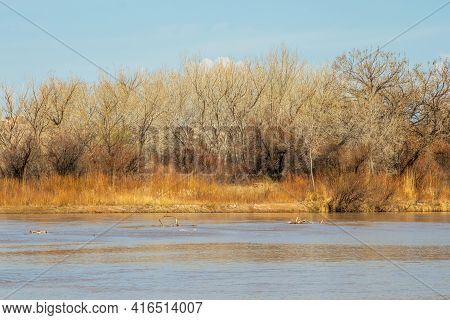 The Rio Grande River In Rio Grande Nature Center State Park, Albuquerque, New Mexico