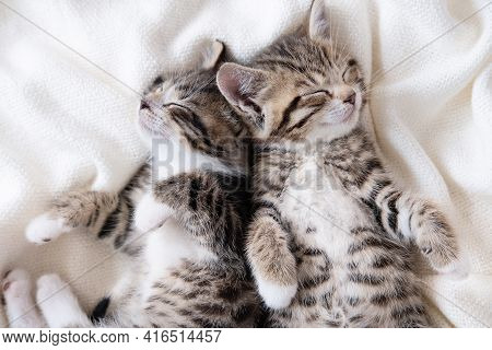 Two Small Striped Domestic Kittens Sleeping At Home Lying On Bed White Blanket Funny Pose. Cute Ador