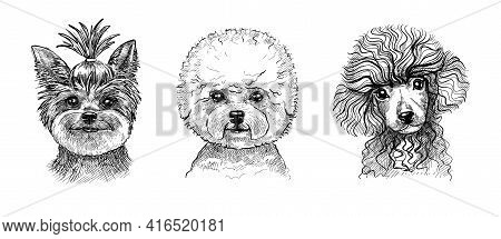 A Set Of Three Portraits Of Cute Puppies Or Dogs. Black And White Sketch In The Style Of Hand-drawn