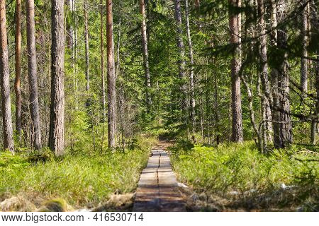 Hiking Forest Trail At Spring Time. Health Life Style Trail For Walking In The Forest