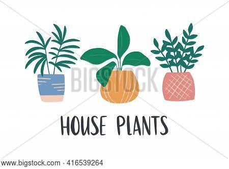 Hand-drawn Tropical House Plant. Trendy Cozy Home Decor. Cute Flower Ficus In A Blue Pot. Urban Jung