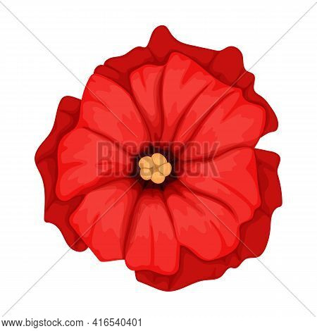 Poppy Flower Vector Cartoon Icon. Vector Illustration Poppy Red On White Background. Isolated Cartoo